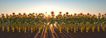 Flokia-Sunrise B_Philipp-Dreber_2